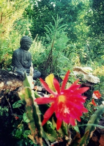 the Red Cactus in the rock garden